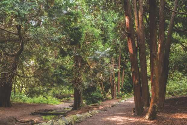 Mabie Forest, Dumfries, Scotland
