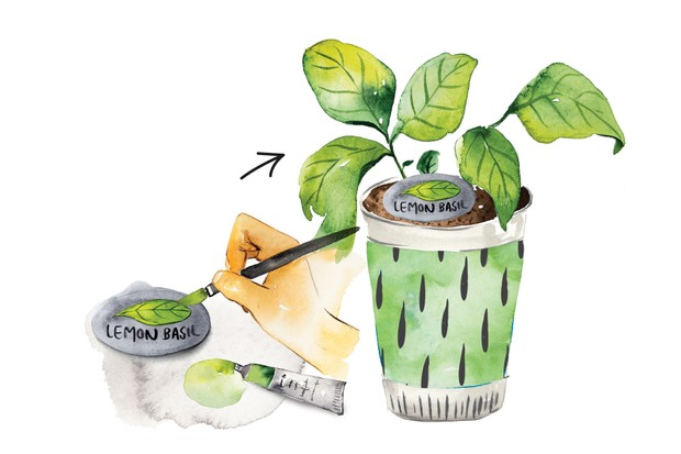 PLANTS_step4