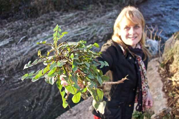Adele Nozedar, forager