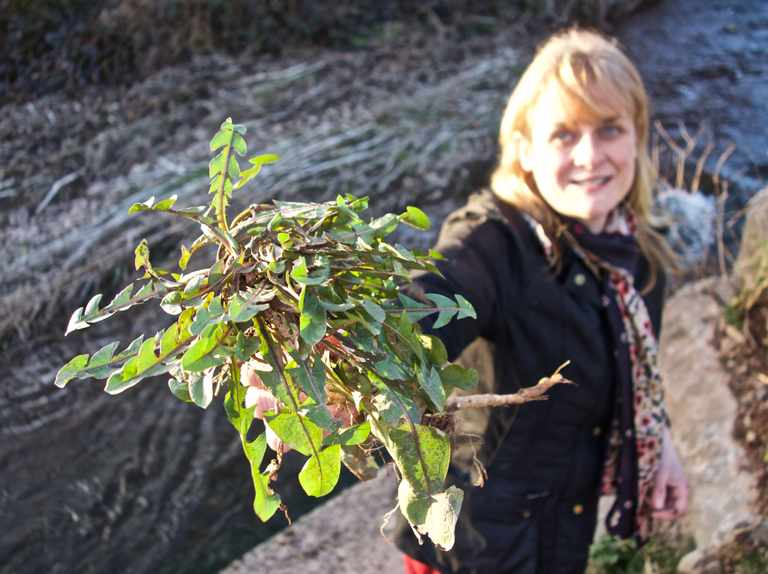 Podcast: discover tasty treats to forage from field and hedgerow
