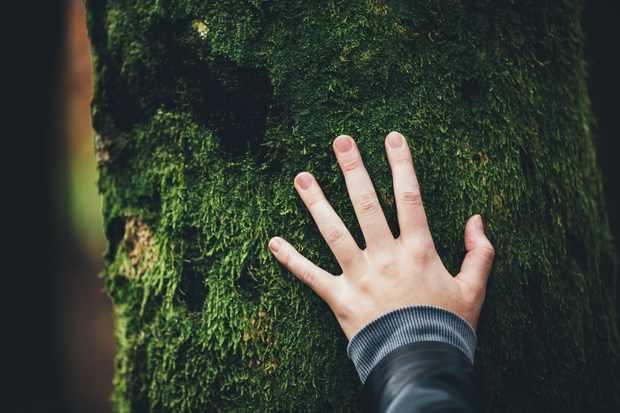 hand on tree