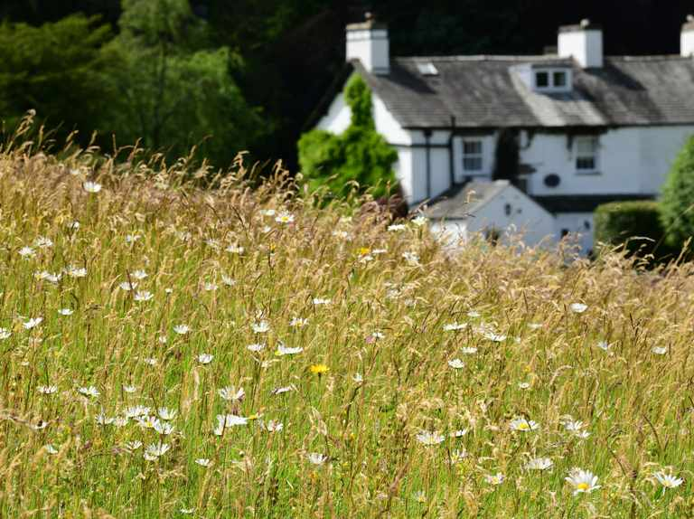 Rare species thriving once again in Beatrix Potter's hay meadows