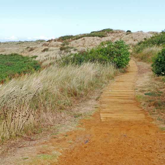 Sand dune boardwalk