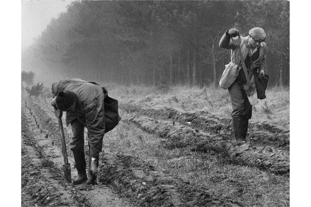 First trees planted at Eggesford Forest, Devon, 1919