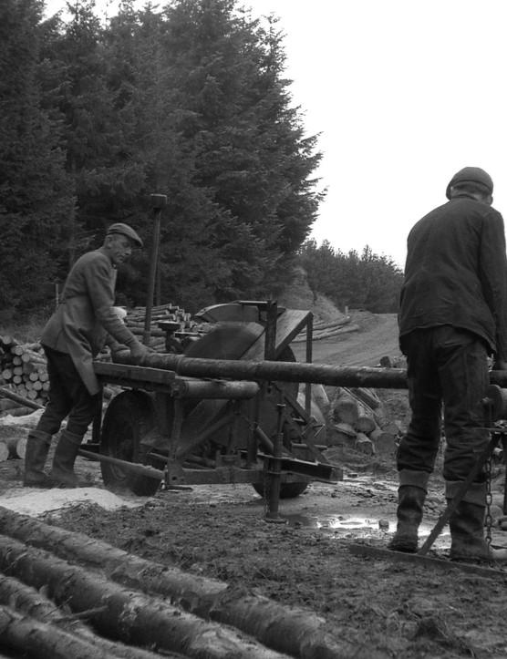 Cross cutting Sitka spruce, Kielder Forest, 1961