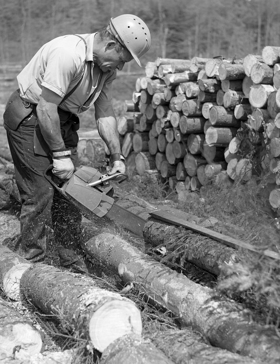 Cross cutting with a power saw at Alice Holt Forest, Hampshire, 1970