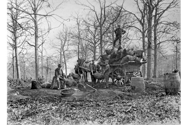 Forestry Commission takes on Royal forests, 1923