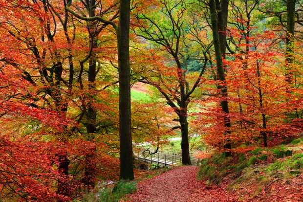 Woodlands in autumn