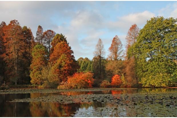 Autumn at Bedgebury