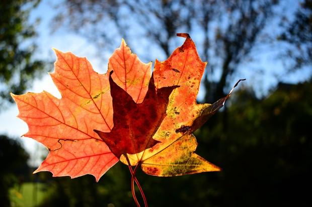 Sunlight shining through colourful autumn leaves