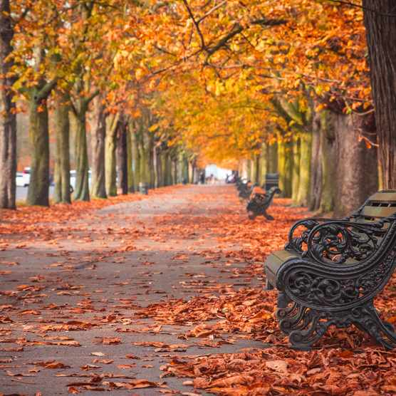 Autumn scene with tree avenue and bench