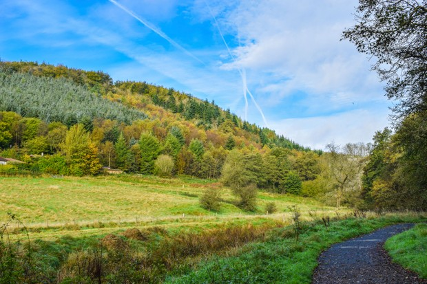 Dalby Forest, North Yorkshire (Photo by: Forestry Commission)