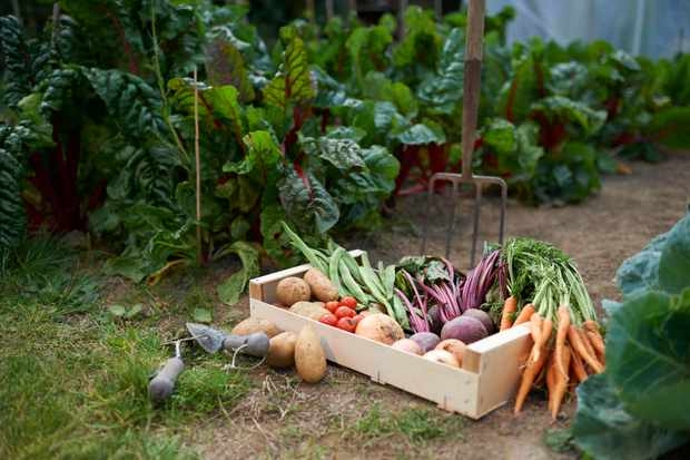 How to double dig a vegetable plot
