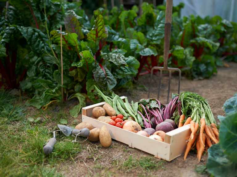 How to double-dig a vegetable plot