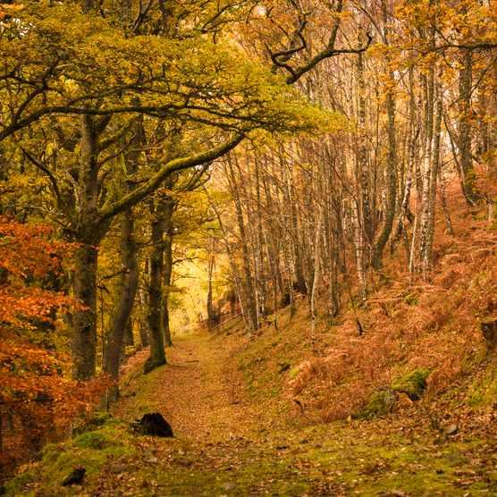 Footpath through autumn woodland