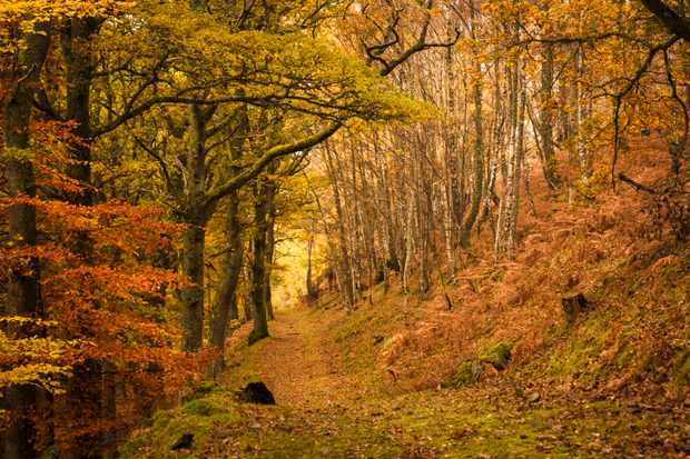 Footpath through autumn woodland