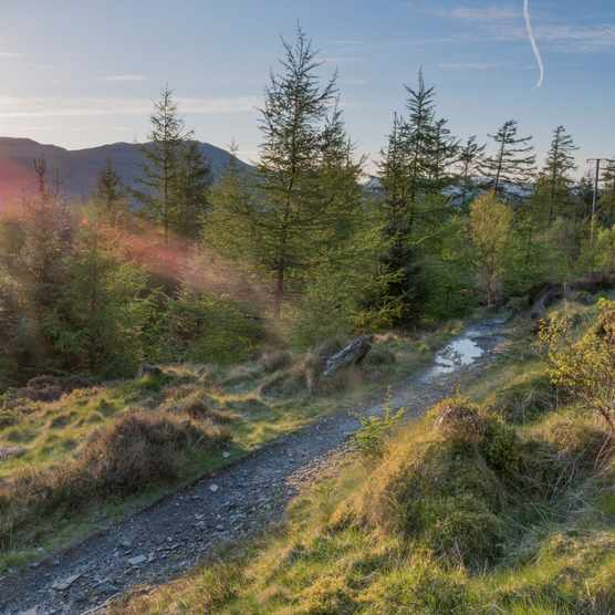 Grizedale Forest, Cumbria (Photo by: Forestry Commission)