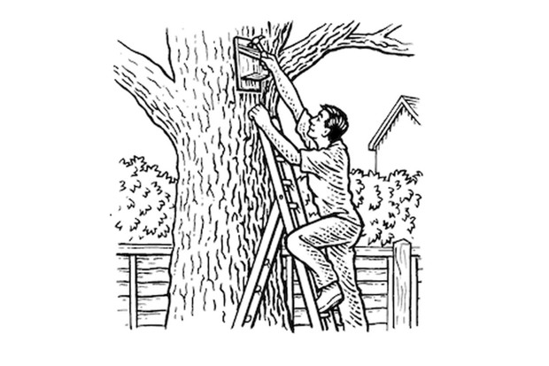 How to make a nestbox