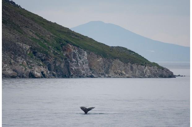 Wale watch