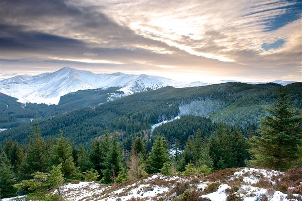 Whinlatter forest, Cumbria (Photo by: Steve Blake)