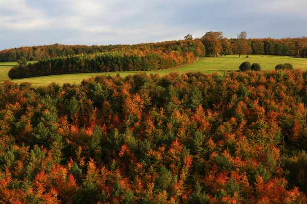 Autumn on the Sussex Downs