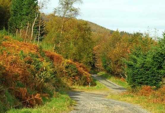 Donard Forest, Northern Ireland