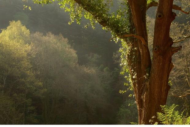 Leigh woods