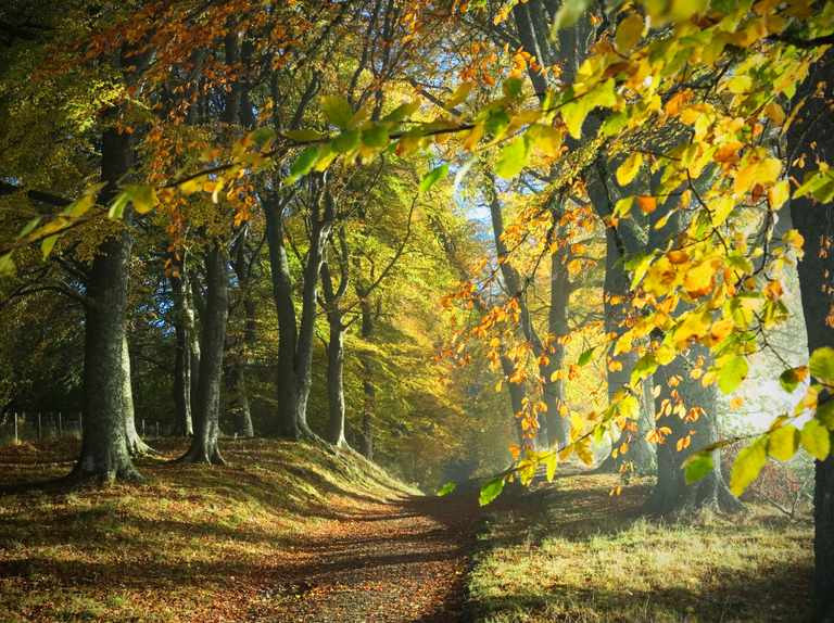 History of Britain's forests and woodlands: celebrating 100 years of the Forestry Commission