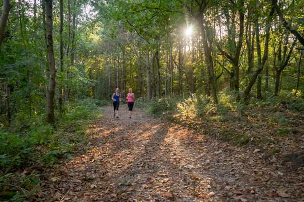 Women running in forest