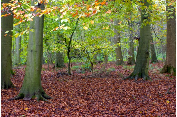 Salcey Forest, Northamptonshire (Photo by: Getty Images)