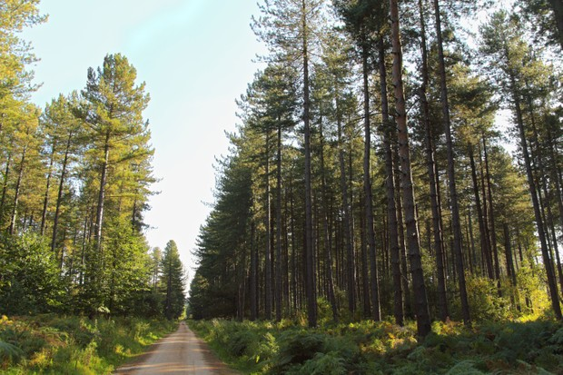 Sherwood Pines, Nottinghamshire (Photo by: Getty Images)