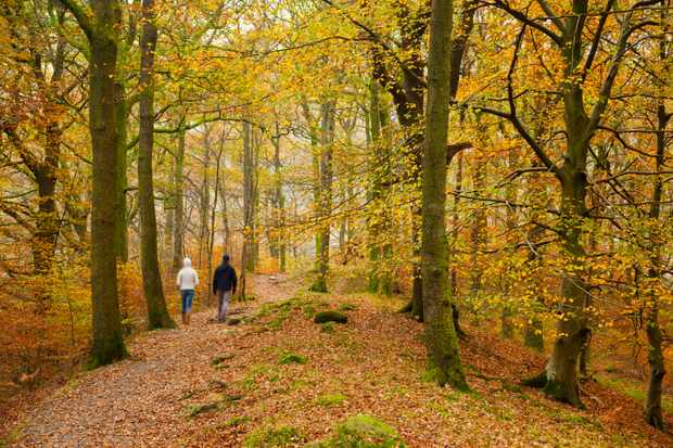 Couple walking in Beech woodlands in autumn