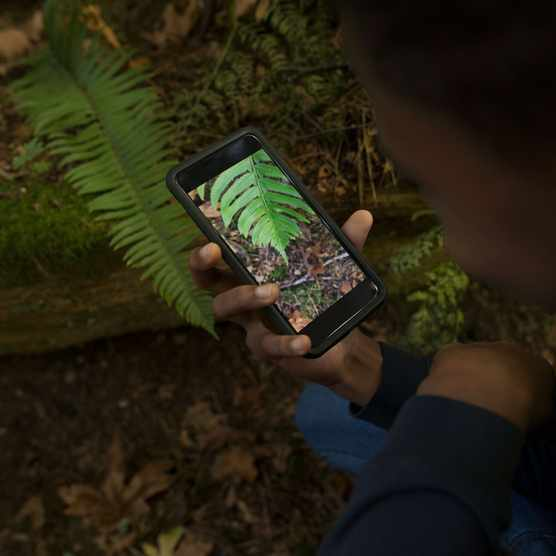 Getty Images Overhead view boy with camera phone photographing fern plant in woods