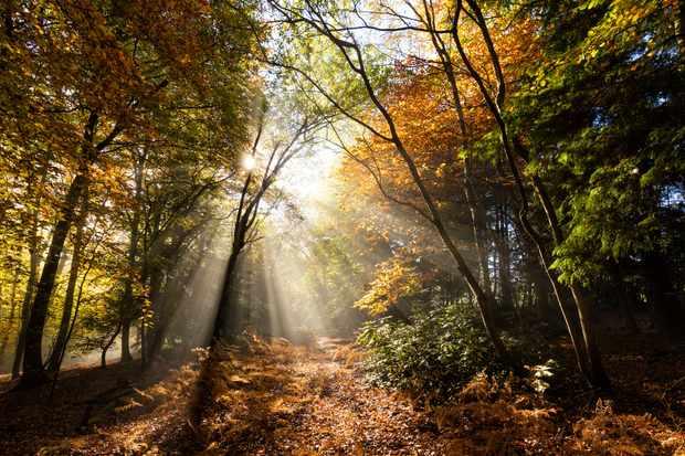 Forest autumn UK