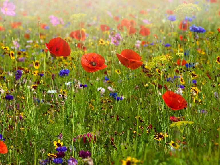 British seasonal wildflowers guide: how to identify, when to see and where to find them