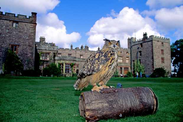 Castle with owl