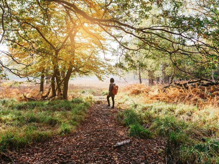 Mindfulness Week: how to take part and calming activities to enjoy daily