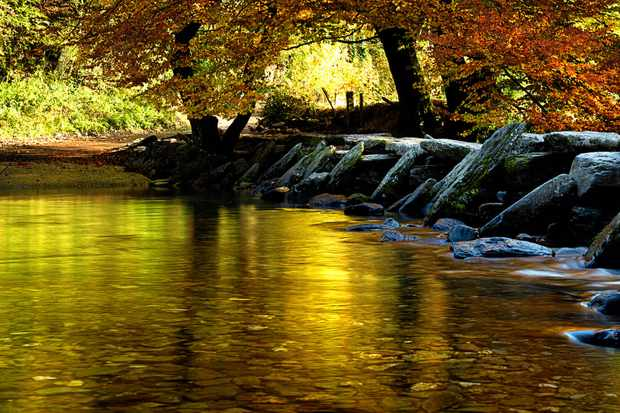 An autumnal stream surrounded by trees in Exmoor