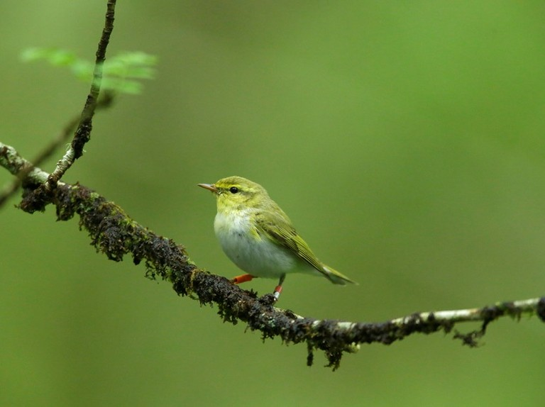 Birds benefitting from climate change today may struggle tomorrow