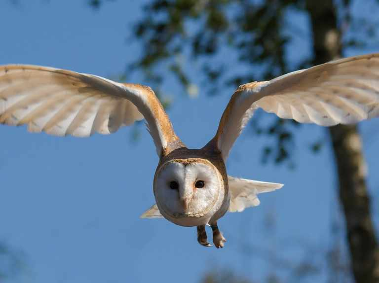 Noise pollution found to threaten the survival of many species