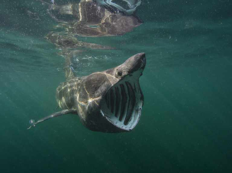 Turbulent year for UK's marine wildlife, finds annual review