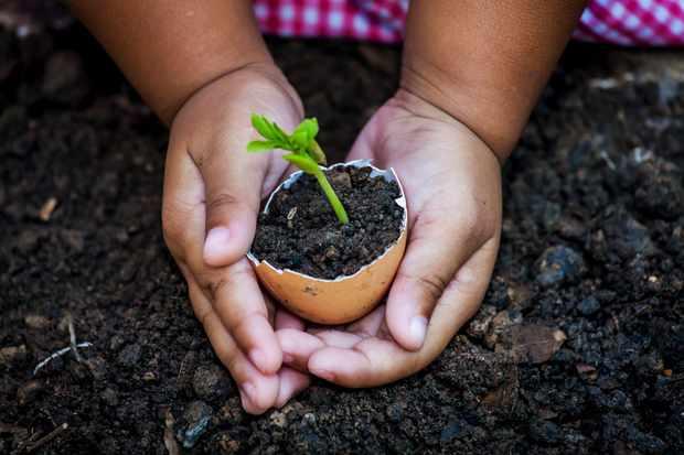 Sow seeds in eggshells