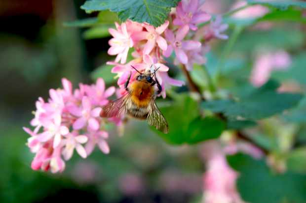 Best spring plants for pollinators