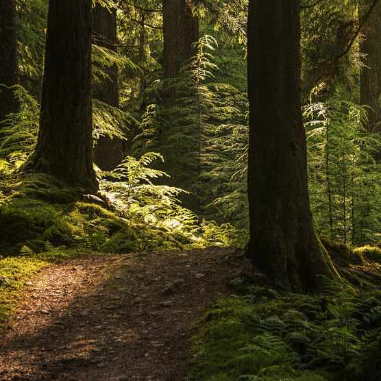 Woodland in sunlight