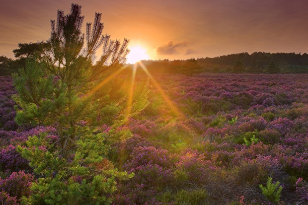 Sunset over heathland, Arne RSPB reserve, Summer 2009