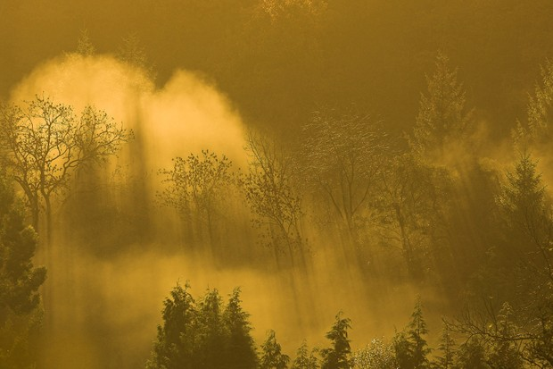 Forest shrouded in mist at dawn, Lake Vyrnwy RSPB reserve