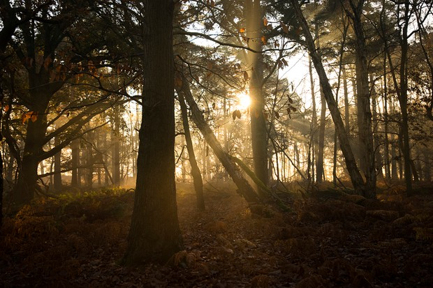 Sunrise through the trees, RSPB The Lodge Nature Reserve, Bedfordshire, December
