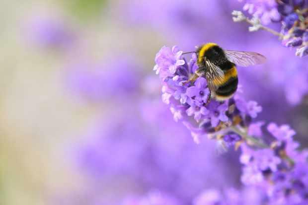 Best summer plants for pollinators