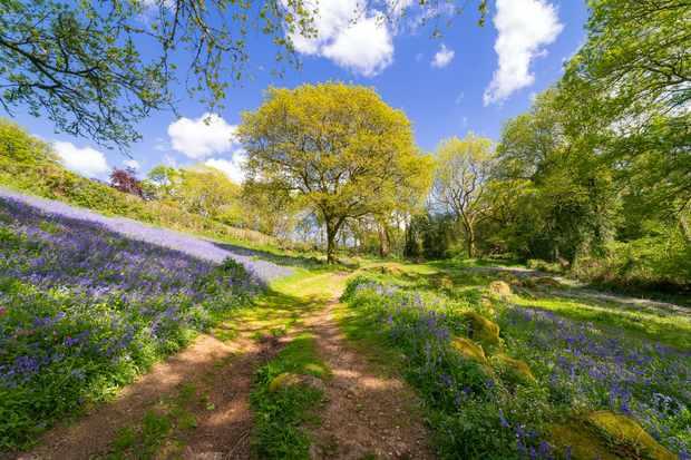 How wild farming is helping cuckoos and rare butterflies on Dartmoor