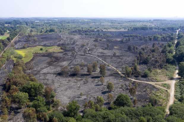 Chobham Common wildfire destroys vital wildlife habitat